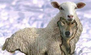 jord_wolf-sheep